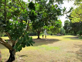 A view of the trees on the grounds