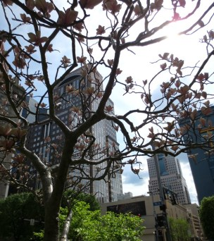 """These magnolias are fiction. """"Magnolias in Pittsburgh"""" is an installation at Penn Ave and Seventh Street."""