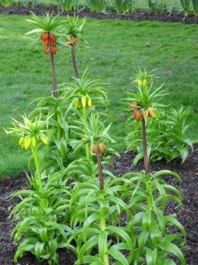 Halifax Public Gardens in May growing plants