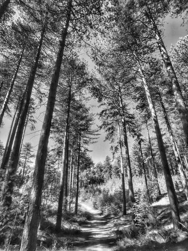 Pine woods at ainsdale beach in southport, U.K.