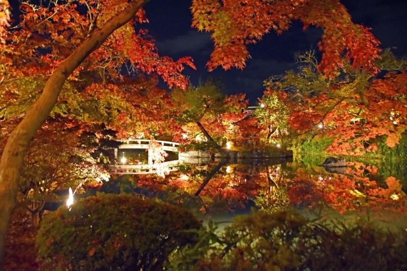 Eikando koyo light up 123