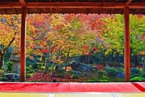 【紅葉】圓光寺、赤もうせん越しの額縁庭園が絶景!〜京都一乗寺〜