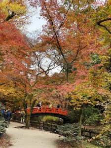 【紅葉】北野天満宮、紅葉の名所「もみじ苑」を散策