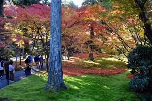 【紅葉】京都・大原・三千院、苔むす庭園に輝く紅葉が美しい!