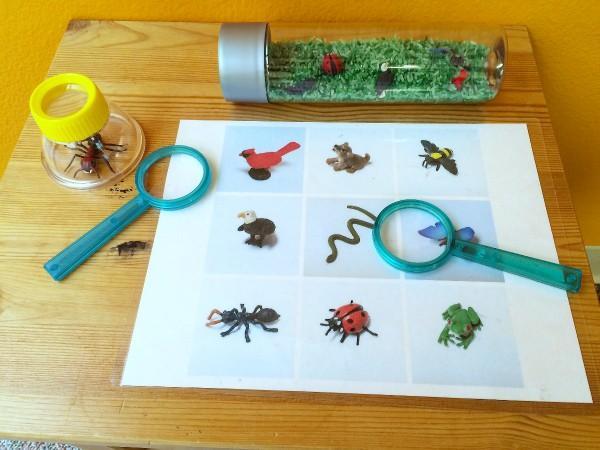 Preschool Science Worksheets Free