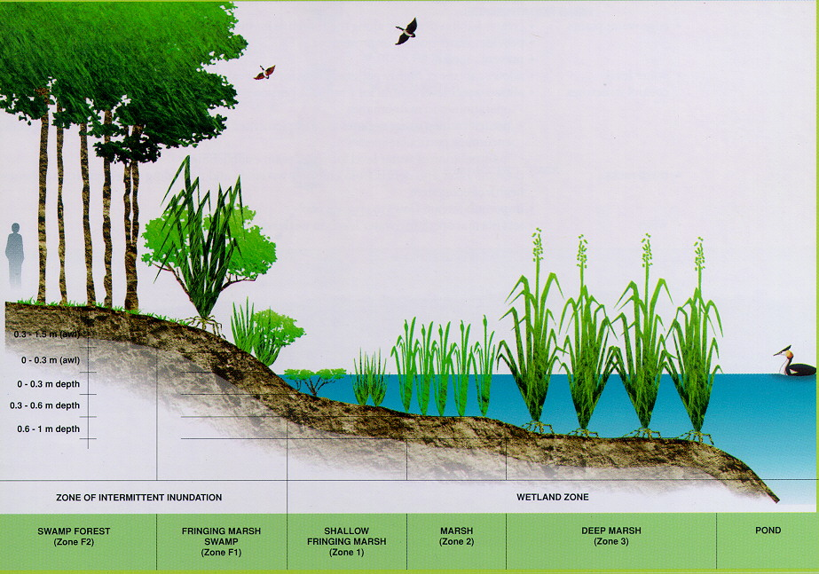 Figure 4: Typical layout of a wetland cell