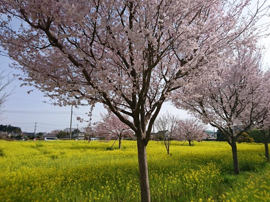 春 っ っ っ ~ ~