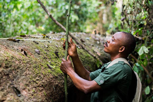 Economic Importance of Forestry sector