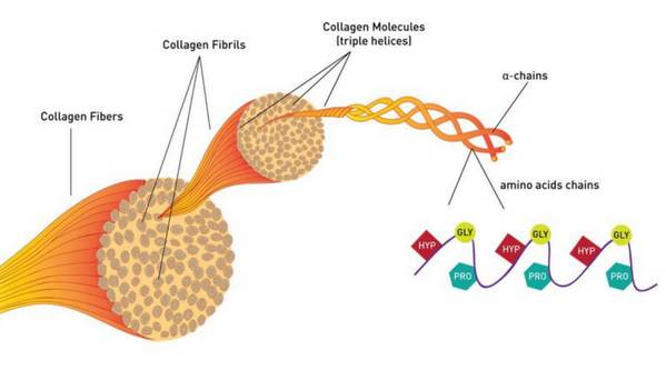 collagen_fiber_900x500_tiny100_grande