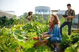 Community Living: The Quick and Easy Guide to Starting a Community Garden
