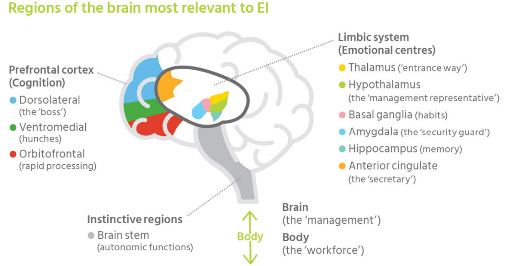 part of the brain explanation