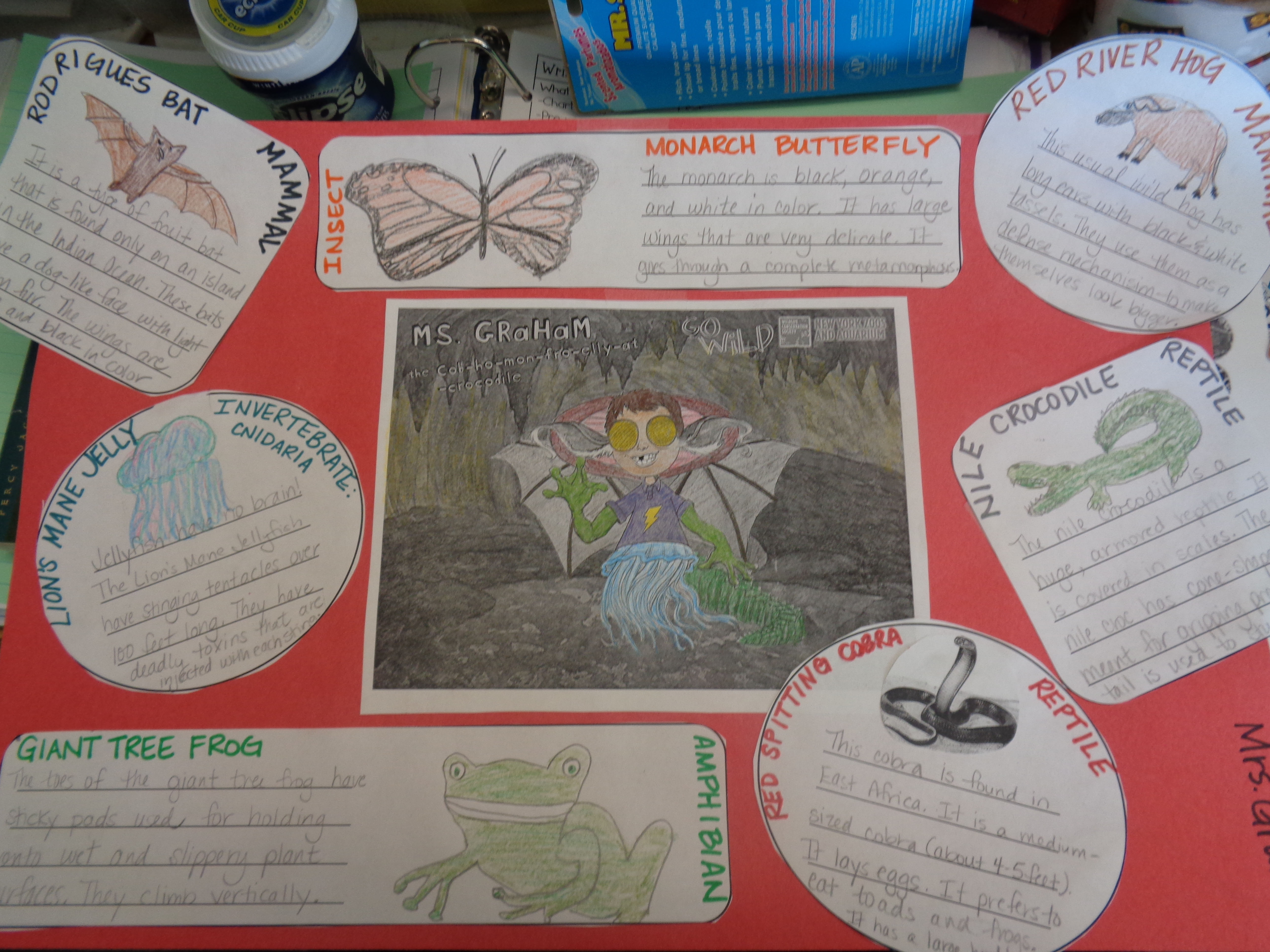 My Wild Self Project Animal Classifications Introduction