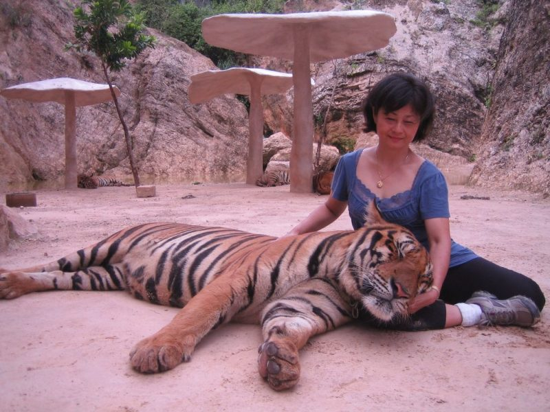Visitors Often Unaware Of Thai Tiger Temple's Controversy