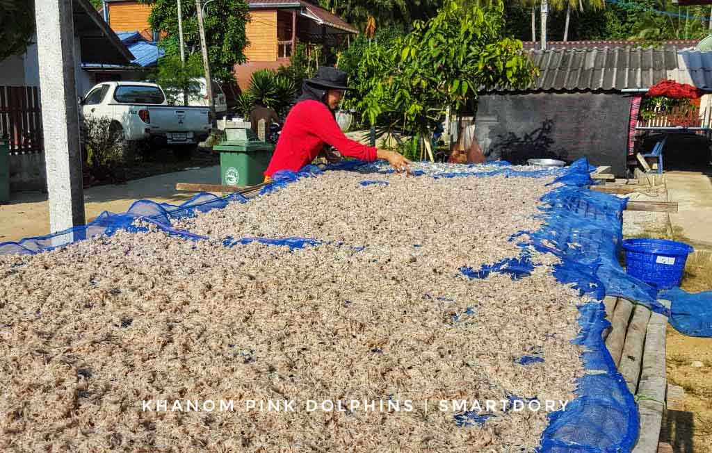 The local fishermen drying shrimps in the sun.