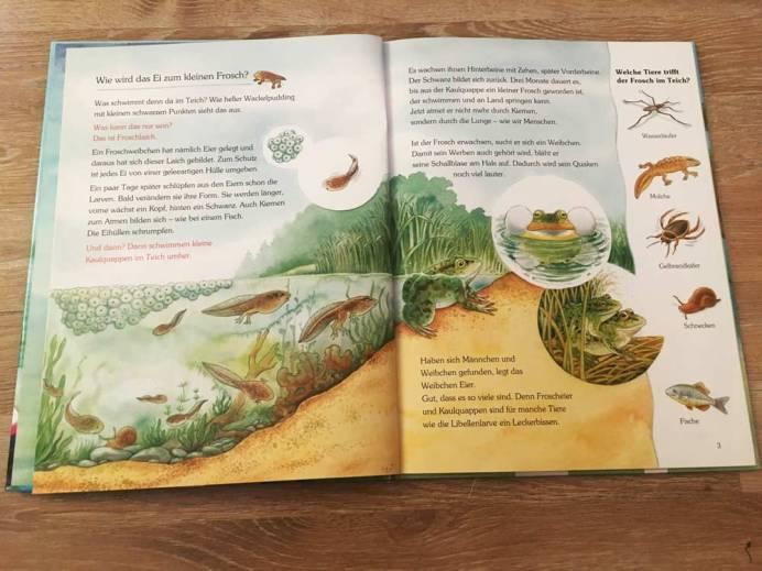 Einblick in das Buch Der kleine Frosch und seine Freunde