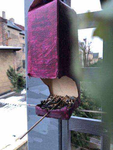 kostenlose Beschäftigungsideen Vogelhäuschen aus Tetrapack basteln