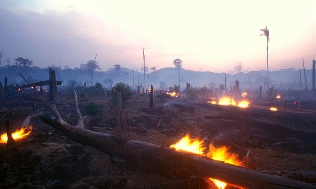 O fracasso da economia na destruição da natureza apresenta 'riscos extremos'