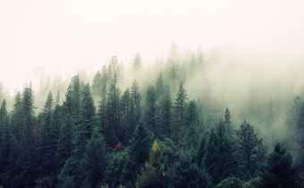 Trees by Joyce Kilmer Poem 198