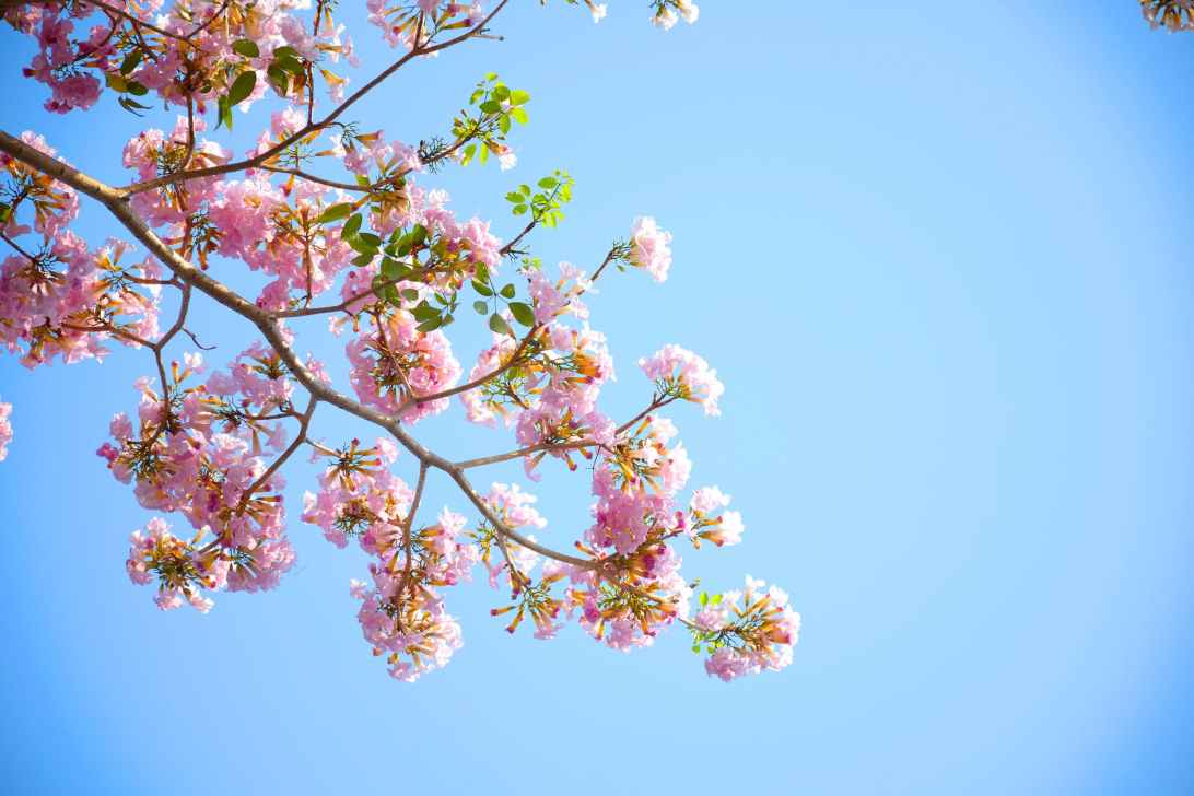 To Blossoms