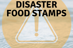 Florida Disaster Food Stamps