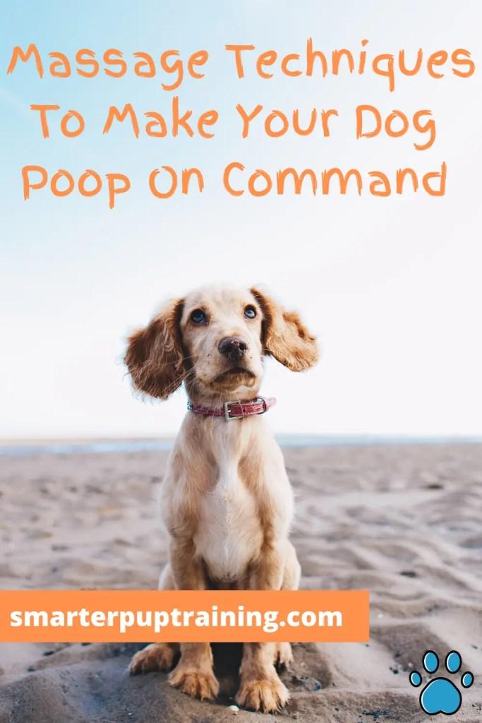 massage a dog to poop