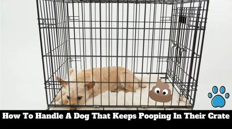 dog keeps pooping in crate