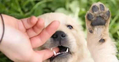 puppy biting hands