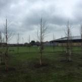 Forest school trees taking shape
