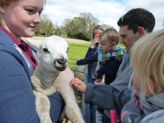 YFC-Lamb-visitors