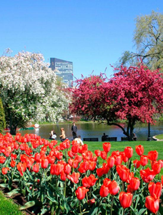 Tiro largo de um parque da cidade com belas árvores e paisagismo