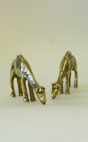 Two Brass Camels & Photograph