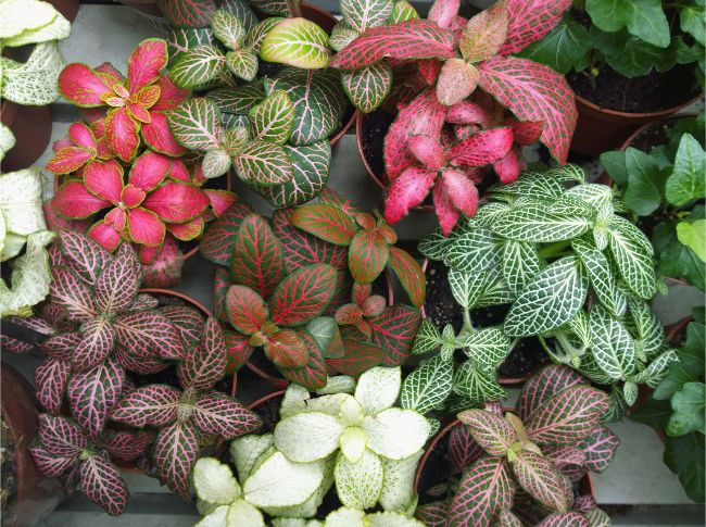 37 Small Indoor Plants To Bring Beauty Into Your Home Smart Garden Guide