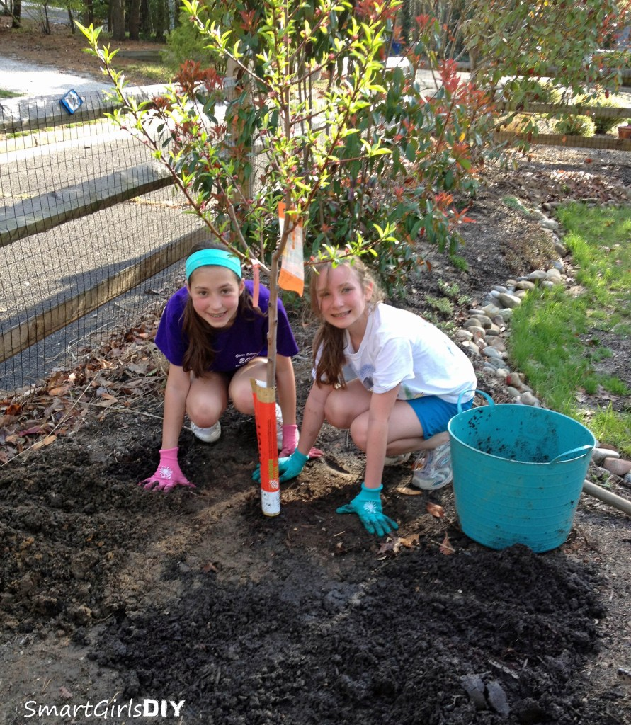 Planting a peach tree with a friend