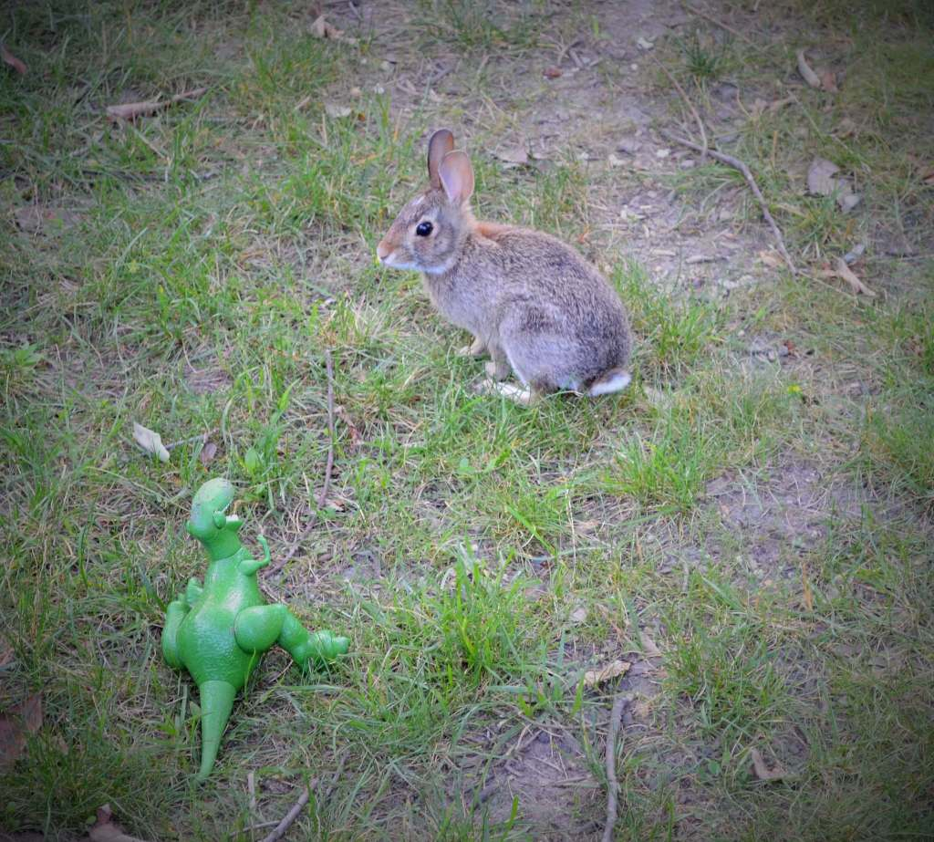 a bunny and dinosaur in our yard