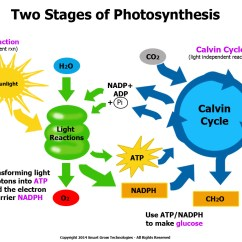 Diagram With Inputs And Outputs Of Photosynthesis Process Cat 6 Wire October 27th 31st Safford Biology