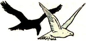 Read more about the article The Pigeon and the Crow – Indian Fairy Tales