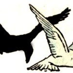 The Pigeon and the Crow – Indian Fairy Tales