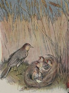 Read more about the article THE LARK AND HER YOUNG ONES – Aesop Fables for Kids