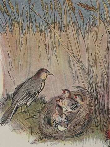 THE LARK AND HER YOUNG ONES – Aesop Fables for Kids