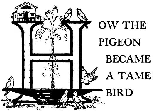 How the Pigeon Became a Tame Bird – Brazilian Fairy Tales