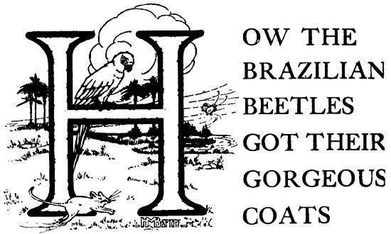 18 How the Brazilian Beetles Got