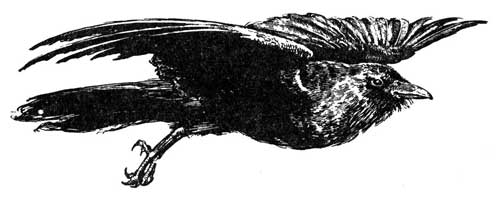 WHY CROWS ARE POOR – Stories the Iroquois Tell Their Children by Mabel Powers