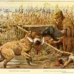 IRISH WATER SPANIEL – Information About Dogs