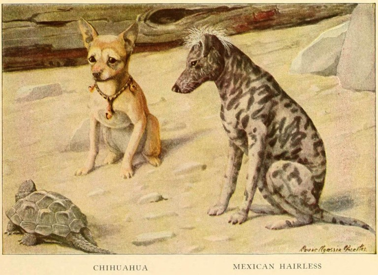 MEXICAN HAIRLESS DOG – Information About Dogs