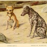 Read more about the article CHIHUAHUA DOGS – Information About Dogs