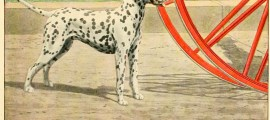 DALMATIAN DOG BREED – COACH DOG – Information About Dogs