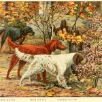 Setter Dog Breeds – Information About Dogs
