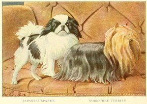 JAPANESE SPANIEL – Information About Dogs