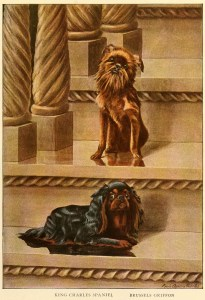 Read more about the article KING CHARLES SPANIEL – Information About Dogs