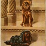 Read more about the article BRUSSELS GRIFFON DOG – Information About Dogs
